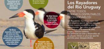 Campaña «Los Rayadores del río Uruguay»